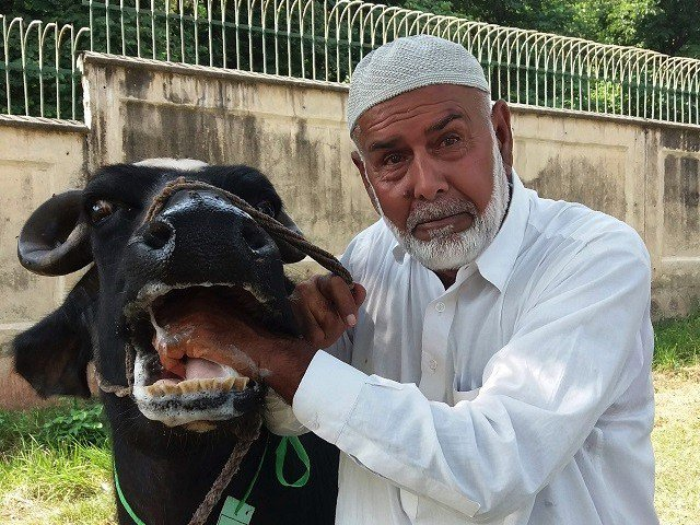 Buffaloes Pakistani Prime Minister Austerity Measures